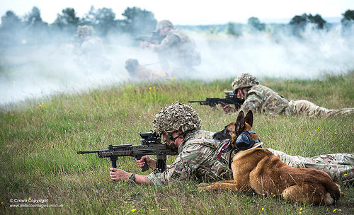 20160622_uk-army_dogs